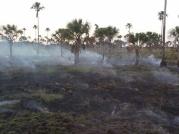 Fogo consome pastagens e árvores na propriedade
