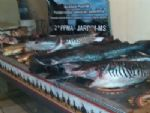 PMA apreende pescado armazenado ilegalmente em pesqueiro