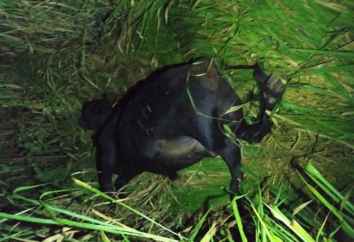 O animal morreu e foi encontrado uma marca que pode identificar o proprietário.